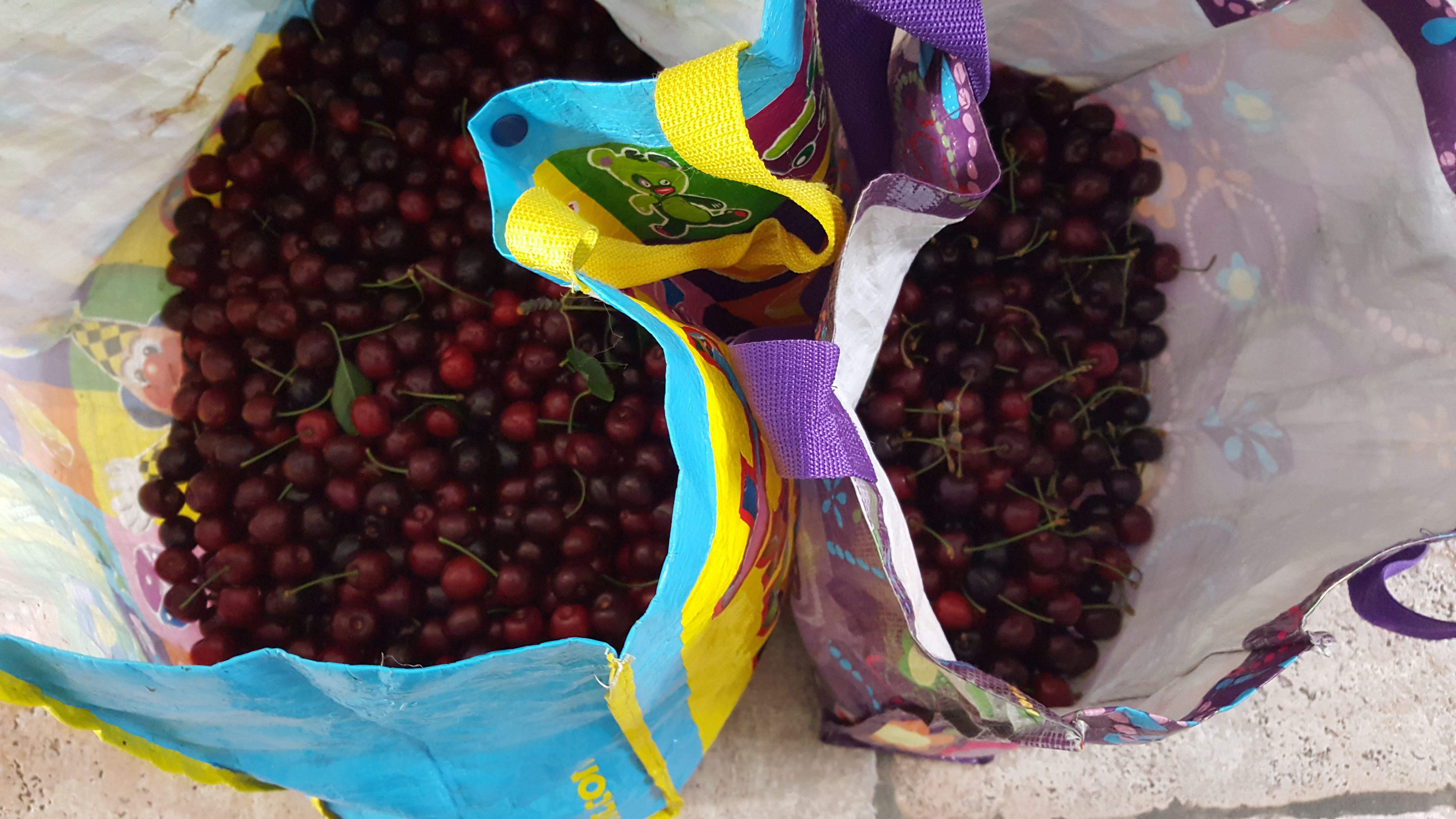 fruit na het eten gisten